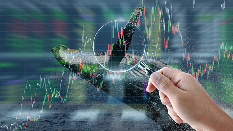 Bitcoin Whales Market Manipulation